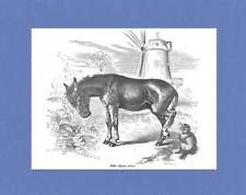 Ass-Windmill-Dog 1895 Engraved Print - Matted 8x10