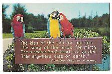 Parrots Gurney Sign Busch Gardens Anheuser Brewery Tampa Florida Postcard 1964
