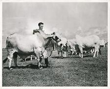FLORIDE c. 1950 - Cheptel de Race Brahmane USA - GF 106