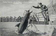 Marineland Florida~Marine Studios~Feeding Time for Porpoise~1939 B&W Postcard