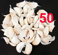 50 FRESH Garlic Seeds cloves From 5 Garlic Bulb UK crop-Solent Wight