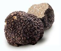 3.53oz 100g fresh Black BURGUNDY TRUFFLE T uncinatum ITALY Deli  трюфель P