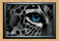 Leopard Blue Eye Photo Print Poster Picture Home Decor A4 210 x 297 mm