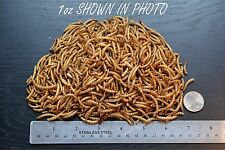 Freeze Dried Mealworms,Cichlid,Oscar,C arnivor,Turtle,Koi,Reptile ,Fish,Bird,Abf28