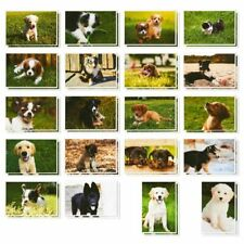 40x Puppy Dog Postcards Bulk Set, All Occasion Assorted Blank Greeting, 4x6""