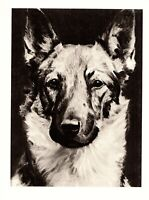 1946 Antique GERMAN SHEPHERD Art Print Vintage Morgan Dennis Dog Art 3884L