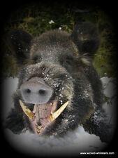 "SASQUATCH SNARES™ HOG SNARE, 84""-1/8 7x7, CamLock, Animal Trap, snare, 1-dozen"