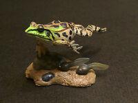 RARE Takara Yujin Kaiyodo Daruma Pond Frog  with Tadpoles Secret SP Figure