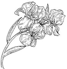 Unmounted Rubber Stamps, Floral Stamps, Iris, Flower, Florals, Spring Flowers