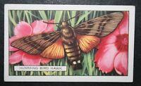 Hummingbird Hawk Moth   Vintage 1930's Colour Card   VGC