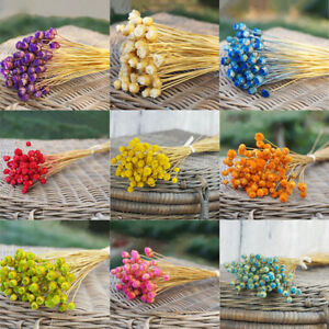 Props Dried Flowers Bouquets Plant Stems Real Flower Kawaii Happy Flower