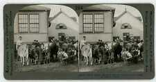 Canada TORONTO CNE Canadian National Exhibition Fair Jersey Cattle 21522 ve364d