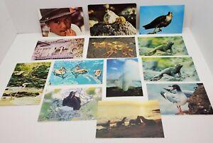 Vtg Ecuador Animal Retile Birds Photo Post Card Lot of 14 South America Souvenir