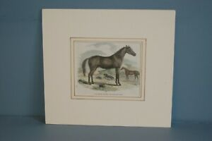 Antique Victorian Hand tinted Wood Cut Engraving of Arab Horse & Hunter+  c1867