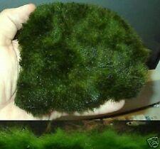 Pflanzmatte Wasserpflanze Deko Pflanzen für den Teich Teichpflanze Teichpflanzen