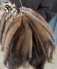 Large Tanned Prime Winter Muskrat pelt, fur seller code: lgmichigansel hide,