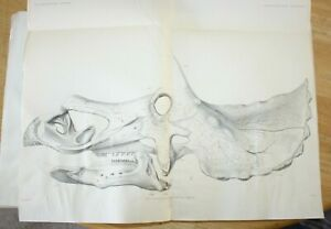 Hatcher Marsh The Ceratopsia 1907 CLASSIC original dinosaur book Rare damaged