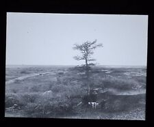 Glass Magic Lantern Slide Russia On The Tundra