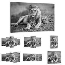 QUADRO MODERNO Stampa su tela re leone della savana 30 FORME IT 3931