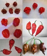 >>> 7 Pot, Trinidad Scorpion & Bhut Jolokia <<< chili semi MIX - 6 super-hot 's ***