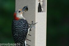 Birds Choice Woodpecker Feeder Snwp Recycled Poly-Lumber Green Top - 1 1/4 Qts