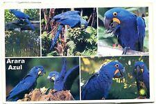 Alte Postkarte - Arara Azul