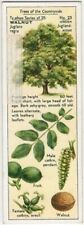 Persian English Walnut Tree Juglans regia 1930s Trade Ad Card