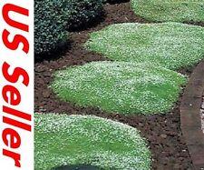 400 Seeds Irish Moss Seeds F103, Home Garden DIY Ground Cover Seeds