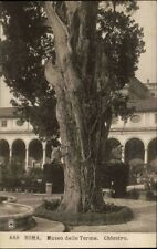 Roma Rom Italien Italia ~1910/20 Bäder Museum Museo Terme Chiostro Kloster Baum