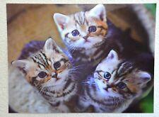 3D Effekt Bild Katzen Babys - Lentikularbild: Kätzchen von oben im Kratzbaum