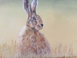 Hare In Corn Field