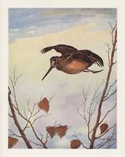 "1946 plate woodcock""dropping in"" 7"" x 9"" W J Schaldach"