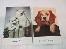 Vintage Standard Arts Berkeley Ca 2 Postcards Pups Cocker Spaniel Samoyede