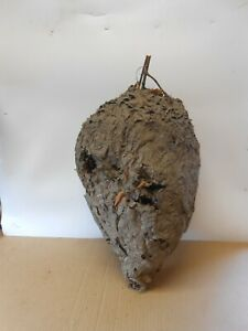 large hornet yellow jacket bees nest hive taxidermy science school natural histo