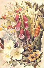 POISONOUS PLANTS. Nightshade. Hellebore. Henbane. Cuckoo-pint. Foxglove 1912
