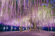 Splendido giardino giapponese PAESAGGIO Canvas #404 Muro per Appendere Foto Art A1