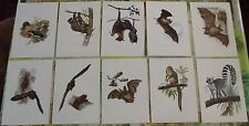 10 Ancienne Planches Affiches 19 x 27 cm Roussette,Rhinolophe,Murin,Pipistrelle