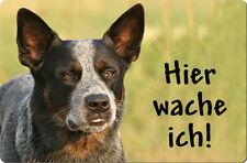 Australian CATTLE DOG - A4 Metall Warnschild Hundeschild Alu SCHILD - ACD 07 T15