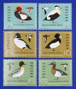 Z75 POLAND 1985 stamp set of 6 Birds Mint NH