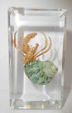 Tawny Hermit Crab Coenobita Rugosus in Clear Paperweight Education Specimen