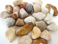 *ONE* Agatized Coral Tumbled Stone 30mm QTY1 Healing Crystal Heart Family