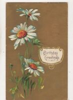 Birthday Greetings Embossed Daisies 1910 Postcard US076
