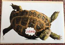 Funny Upside Down Turtle GET WELL american Greetings Card Animal Reptile