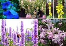 Wer Schmetterlinge liebt: Spezielles Schmetterlings-Blumen-Sortiment / Samen ...
