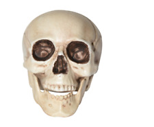 "New! Nwt 8"" Skull ~ Anatomically Very Accurate! Great For Class Or Halloween"