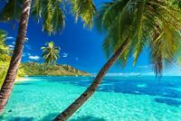 Tropical Tree - Beautiful Landscape Home Wall Art Large Poster & Canvas Pictures