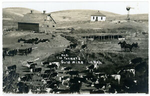 RPPC Real Photo Postcard Nebraska Cattle Farm Cow Ranch Farmers Gold Mine Animal