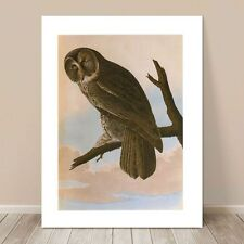 A658 Brown Owl Farm  Tree Grey Funky Animal Canvas Wall Art Large Picture Prints