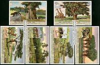 Ethiopian Animals And Plants Etiopio Set Of 6 75+ Y/O Trade Ad  Cards