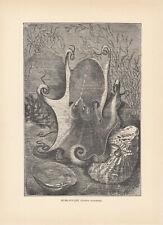 GIANT OCTOPUS SEA MONSTERS ANTIQUE ART PRINT 1894